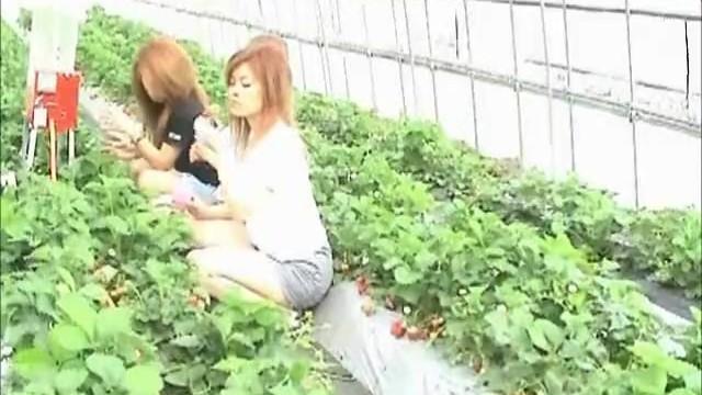 【パンチラ盗撮】イチゴ狩りを楽しむお姉さん達のしゃがみパンティが丸見えな件
